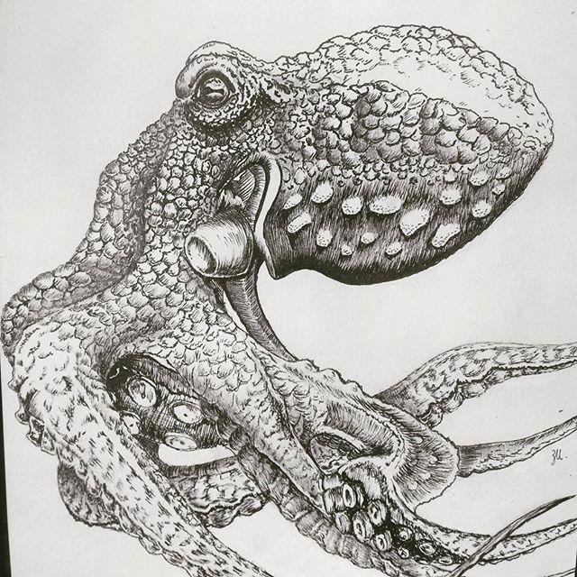 Mr Octopus (version II)