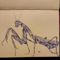 Prey Mantis