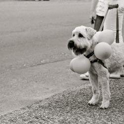 Dog Parade, 2010