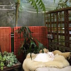 Nursery Cat