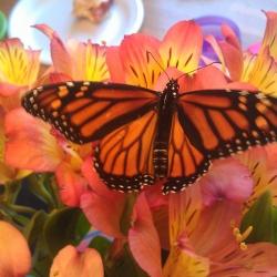 Cripple Butterfly